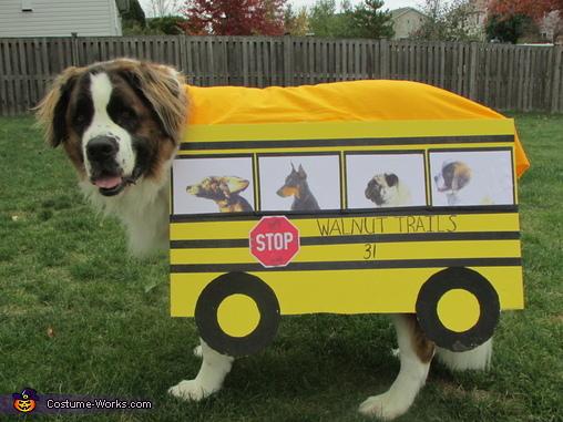 AJ School Bus, Dog School Bus Costume
