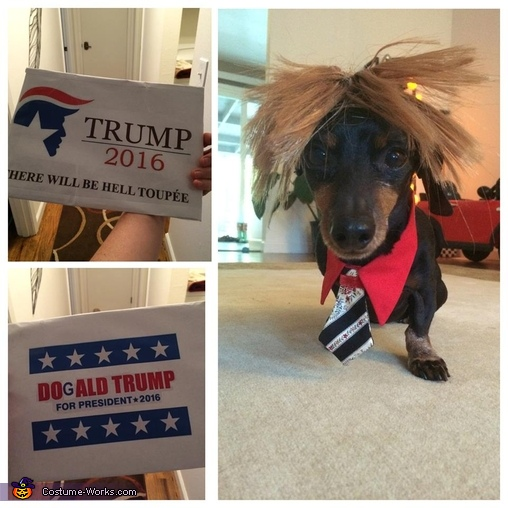 Vote for Dogald Trump!, Dogald Trump Costume