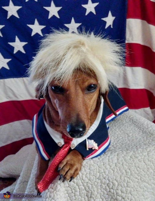 Dogald Trump Dog's Costume
