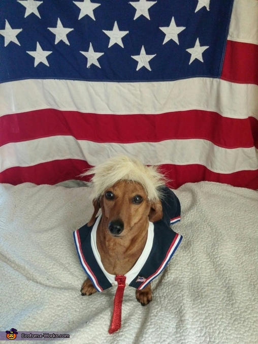 Lucy for President, Dogald Trump Dog's Costume