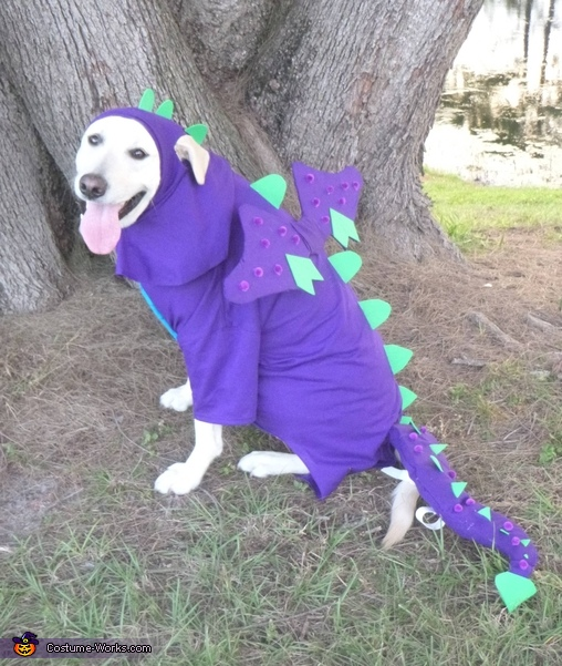 outside dragon on the loose, Dragon Dog Costume