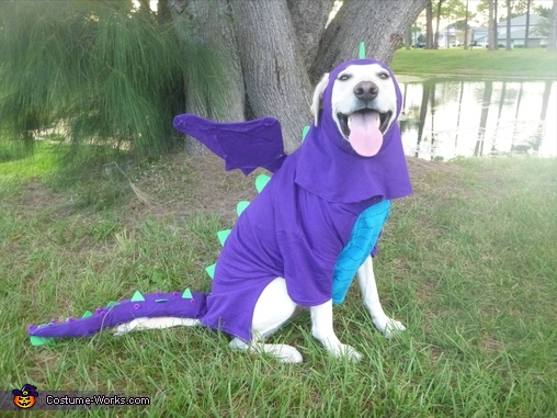 happy dragon, Dragon Dog Costume