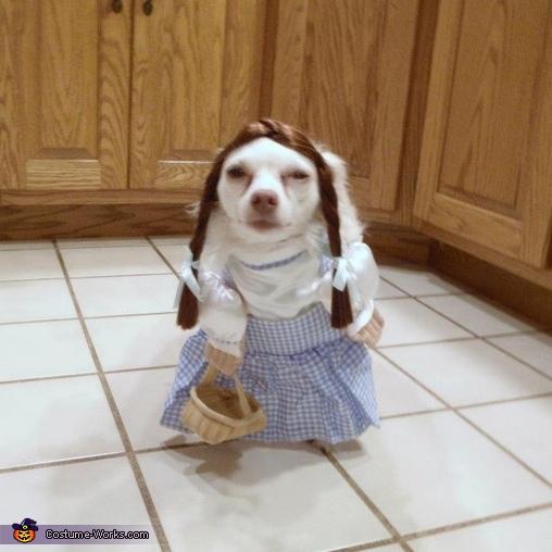 Dogothy - 2, Dogothy Costume