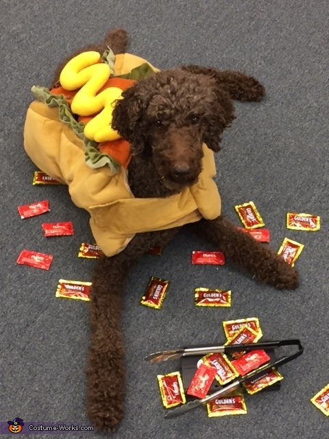 Dog's Delight Costume