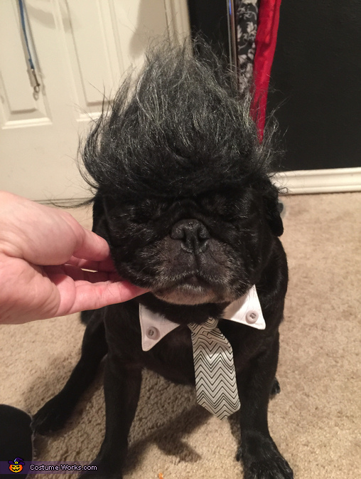 Don King & Ali Pugs Costume