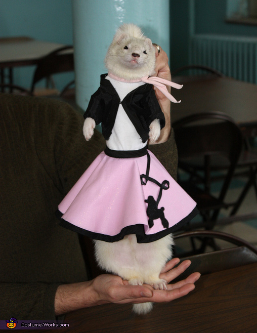 Doo Wop Ferret - Homemade costumes for pets
