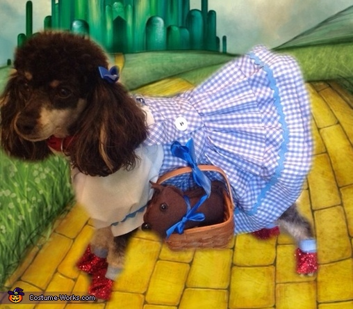 Callie in Oz, Wizard of Oz Dorothy Dog Costume