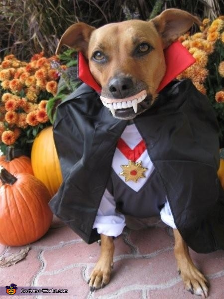 Drac-u-dog Costume