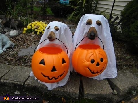 Boo Dogs, Drac-u-dog Costume