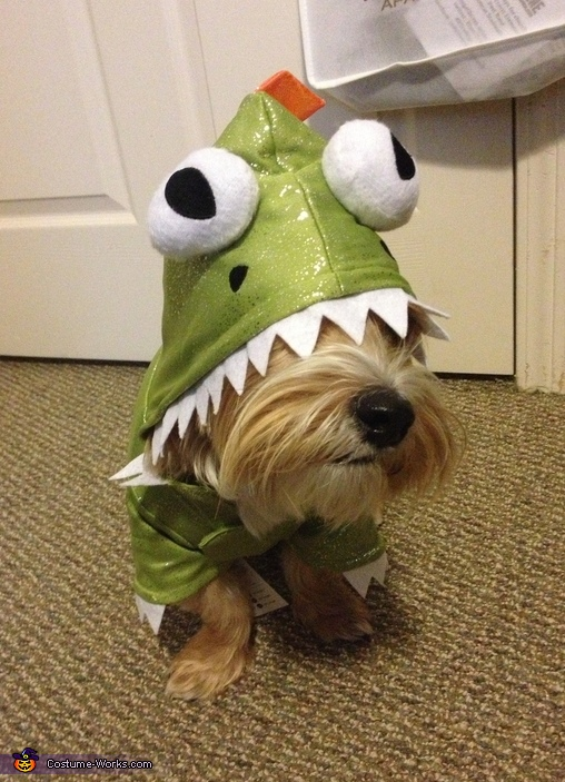 Rawr!!! , Dragon Dog Costume