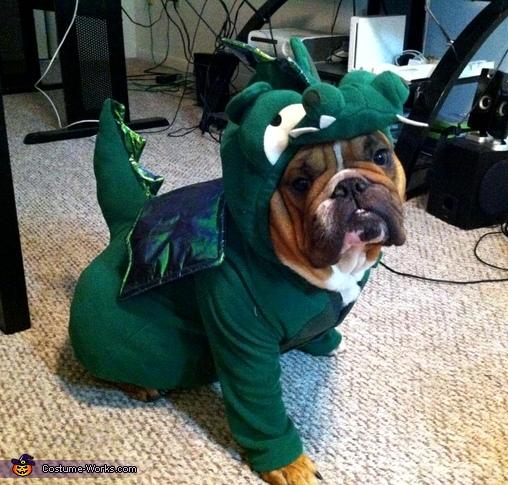 Dragon Dog Costume