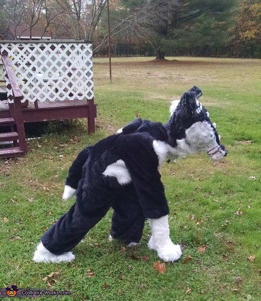 Dragon Wolf walking , Dragon Wolf Costume