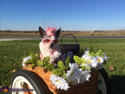 ZsaZsa as Daisy, Driving Miss Daisy Costume