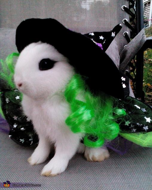 Dwarf Hotot Bunny Witch Costume