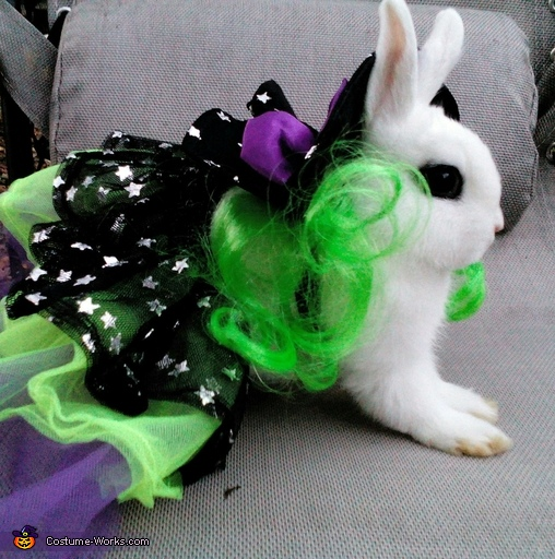 snowball 2, Dwarf Hotot Bunny Witch Costume