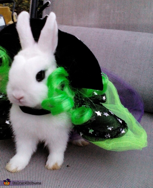 snowball 3, Dwarf Hotot Bunny Witch Costume