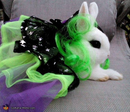 snowball 4, Dwarf Hotot Bunny Witch Costume
