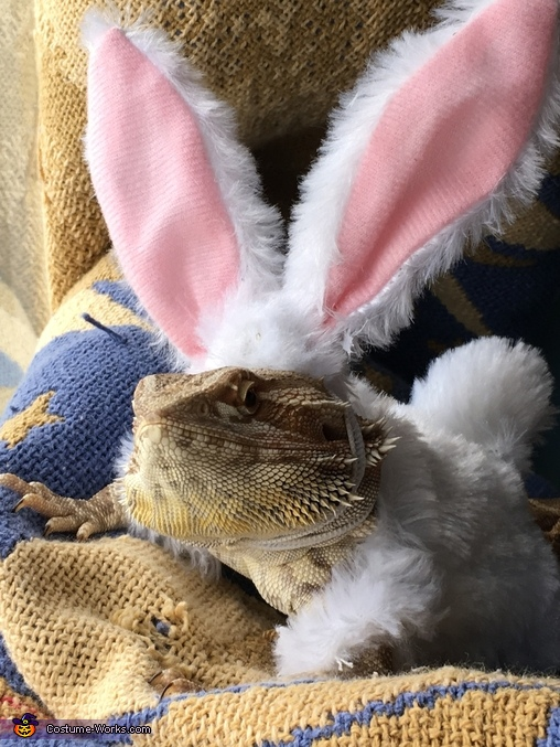 Easter Bunny Homemade Costume