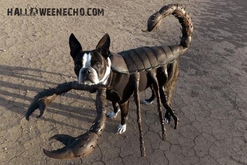 Echo the Scorpion Costume