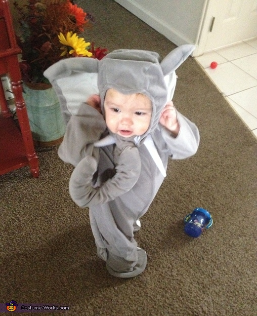 Brody didn't like that his ears were so big. , Elephant Baby Costume