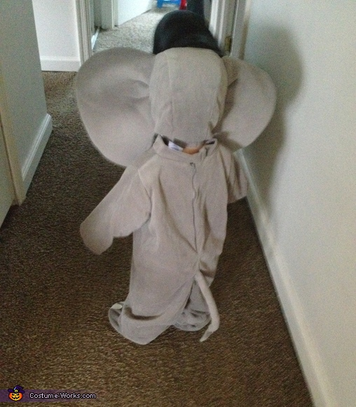 The back, Elephant Baby Costume