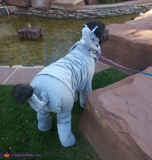Elephant Dog Homemade Costume