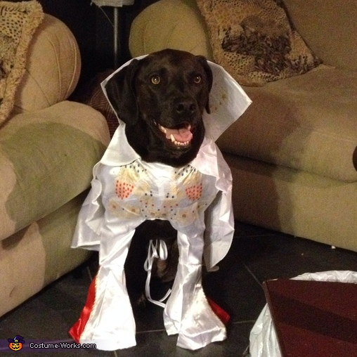 Elvis Dog Costume