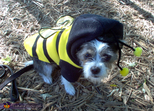 Cute Bee Costume