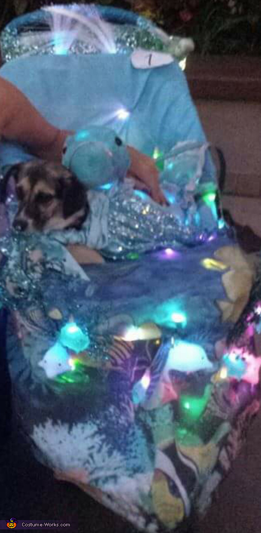 Enchanted Seahorse Dog's Costume
