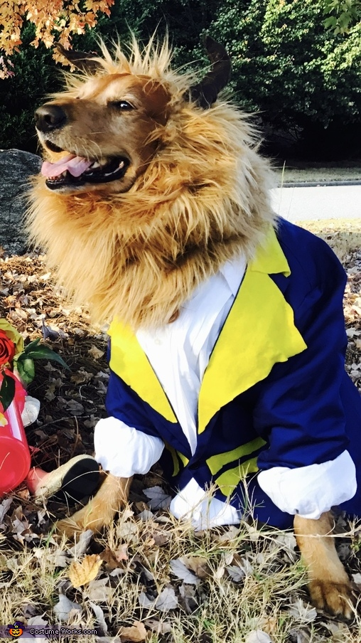 The Beast, Every Beauty needs a Beast Costume
