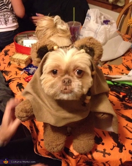 ewok dog costume shih tzu diy ewok dog costume 780
