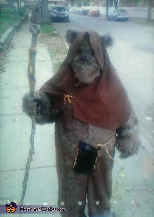 Ewok on the street walking around , Ewok Costume