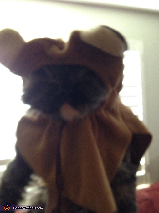 Help me get off of Endor!, Ewok from Endor Cat Costume