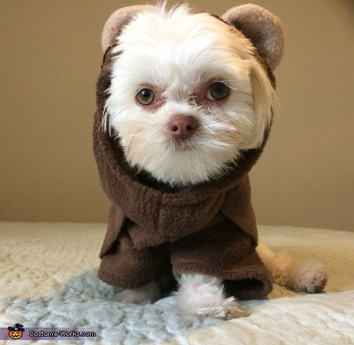 Ewok Puppy Costume
