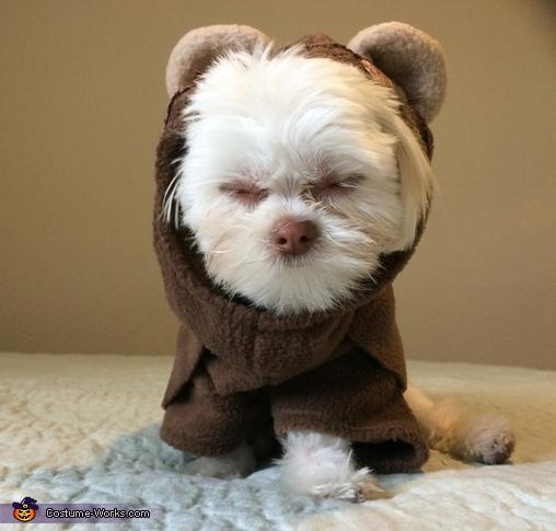 Dia the angry Ewok, Ewok Puppy Costume