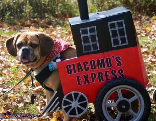 Express Train Dog Costume