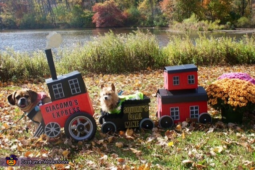 Express Train Dog Homemade Costume