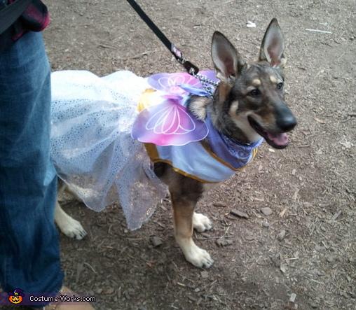 Fairy Princess Dog Costume