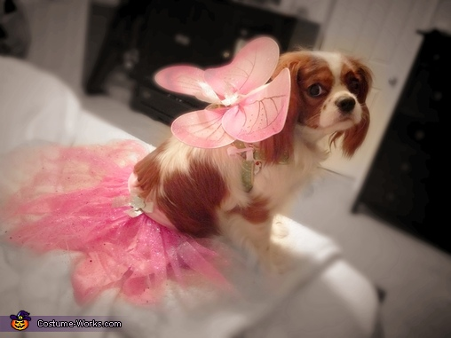 Maddie shows off her beautiful wings and skirt, Fairy Princess Dog Costume