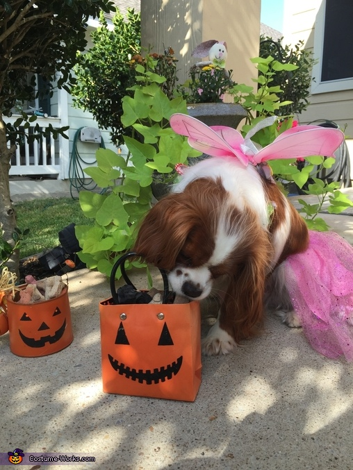 Maddie samples a treat to make sure they are suitable for her friends., Fairy Princess Dog Costume