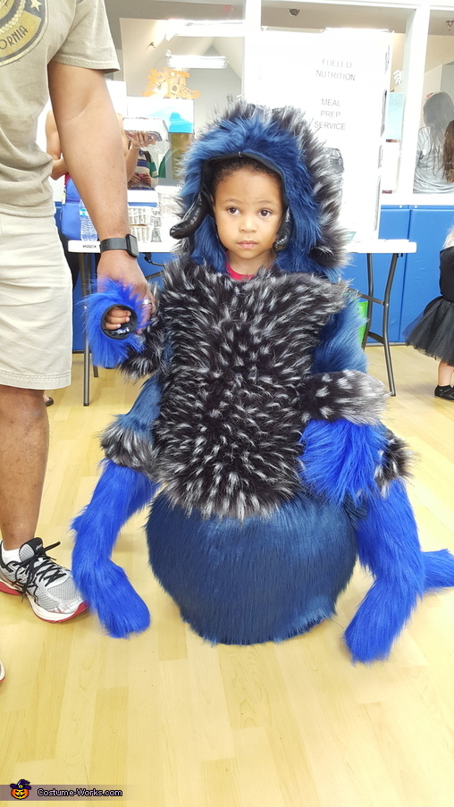 Cobalt Tarantula, Family of Spiders Costume