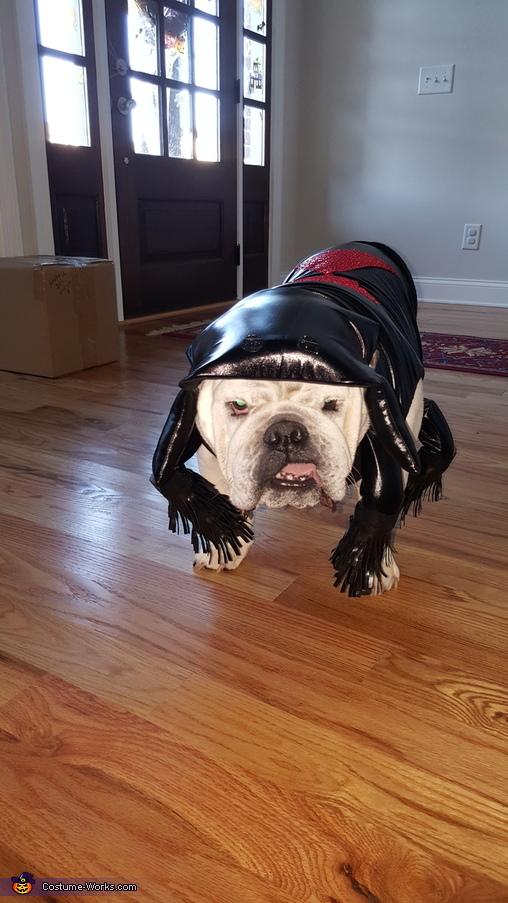 Bulldog, Family of Spiders Costume