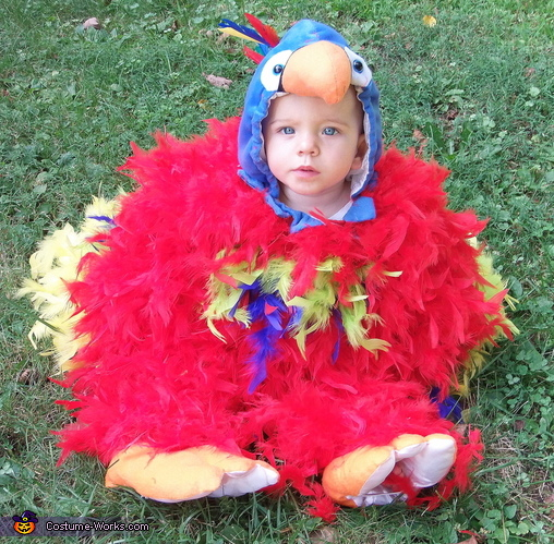 More of the parrot costume, Feathery Fluffy Parrot Baby Costume
