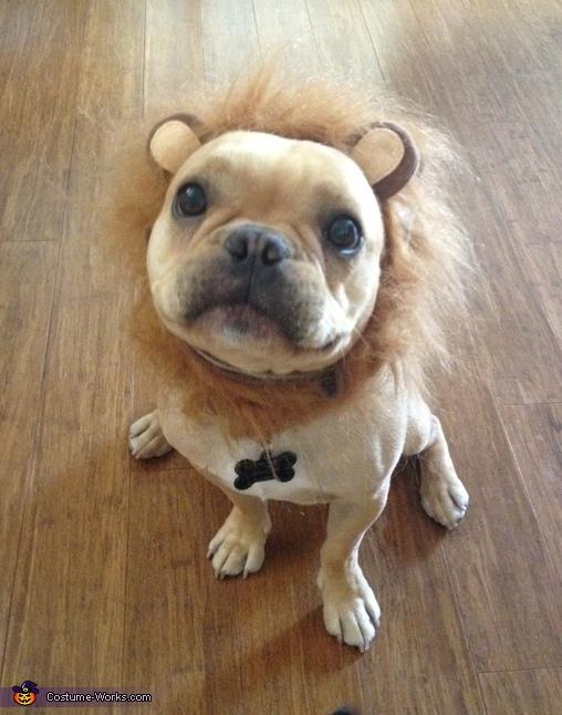 Ferocious Beast on the Loose Costume