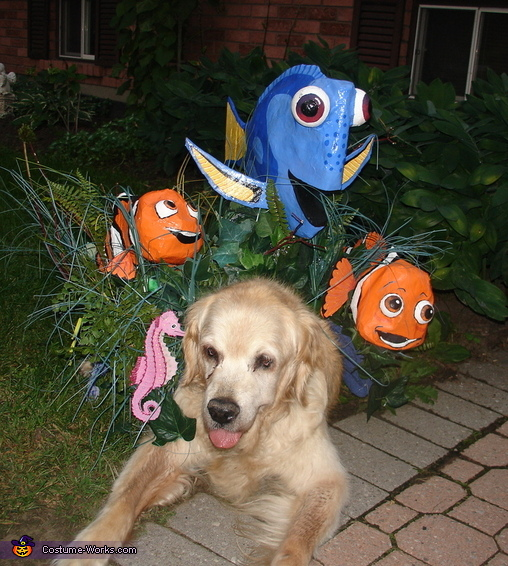Finding Dory Dog Costume