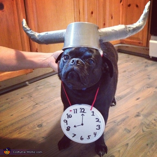 Flava Flav - Homemade costumes for pets