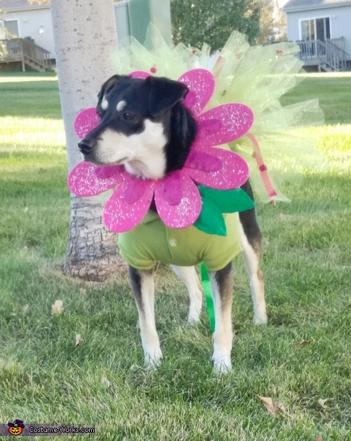 So cute!, Flower Puppy Costume