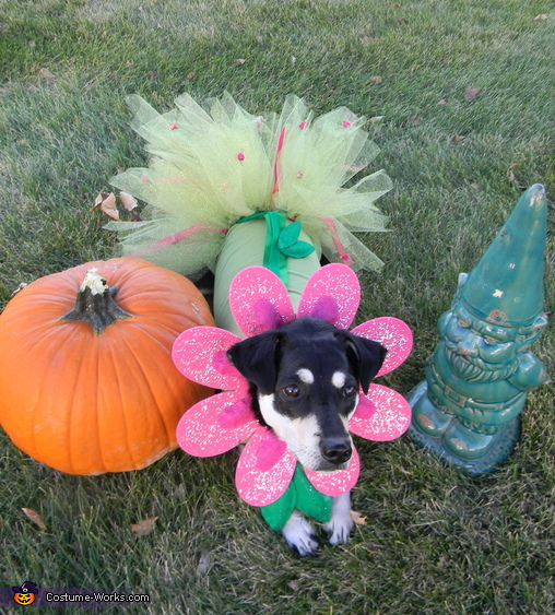 little flower angel, Flower Puppy Costume