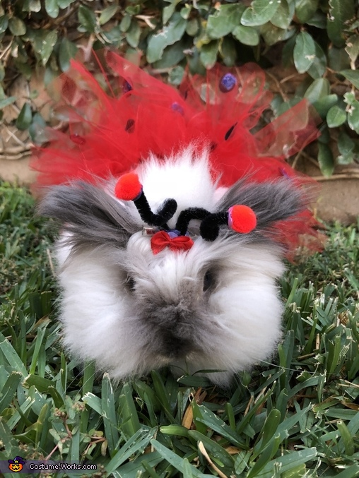 Charliee the Fluffy Ladybug Costume