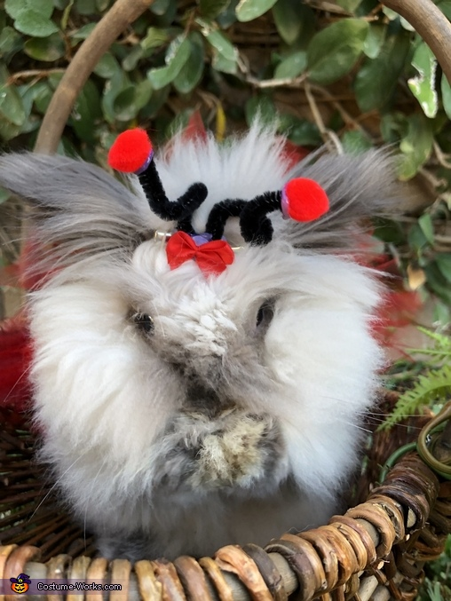 Trying not to sneeze..., Charliee the Fluffy Ladybug Costume
